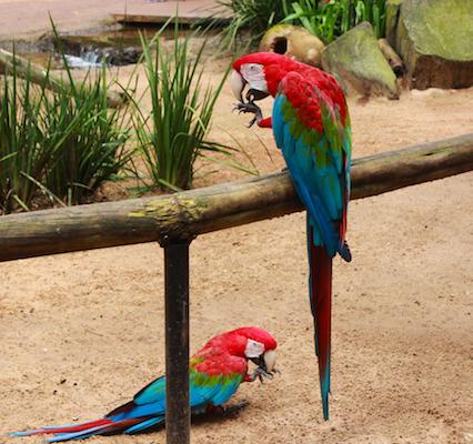 parque-das-aves-foz-do-iguacu-1