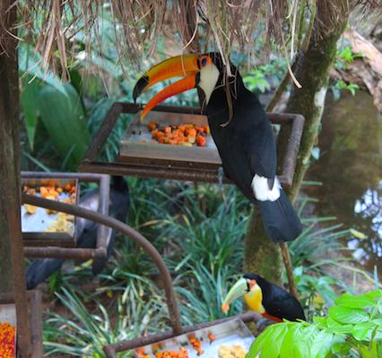 parque-das-aves-foz-do-iguacu-3